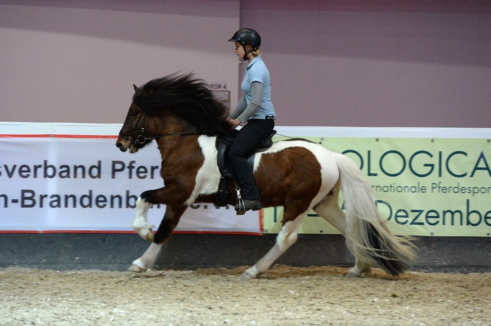 Hollywood setzt auf American Saddlebred Horses - Berlins Pferdesportevent HIPPOLOGICA stellt die Pferderasse vor