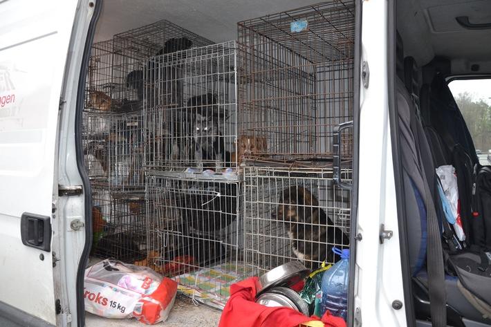 POL-DA: Darmstadt: Transporter mit elf Hunden und sechs Katzen gestoppt / Tiere ins Tierheim gebracht