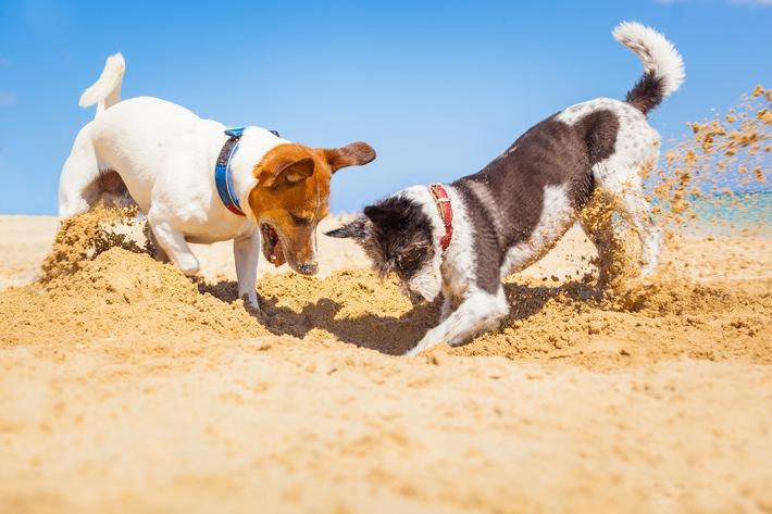 Unvergessliche Urlaubstage mit dem Hund / Aber auf einige Mitbringsel kann man gut verzichten