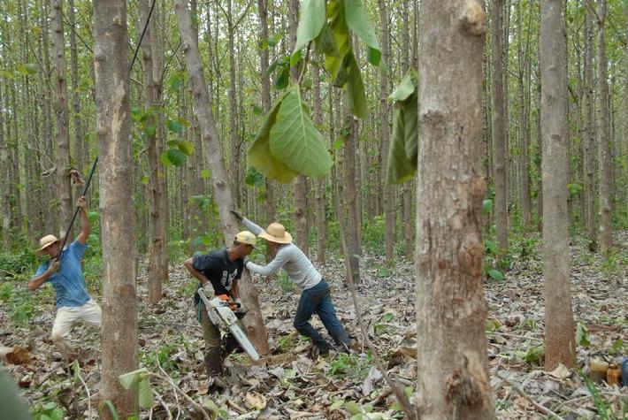 Auszahlung 2012: Die ShareWood Switzerland AG zahlt zum vierten Mal Holzerlöse an Baumeigentümer aus