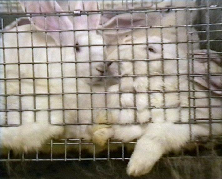 Millionenfaches Kaninchenleid: TV-Beitrag untermauert Forderung des Deutschen Tierschutzbundes nach verbindlichem Gesetz (mit Bild)