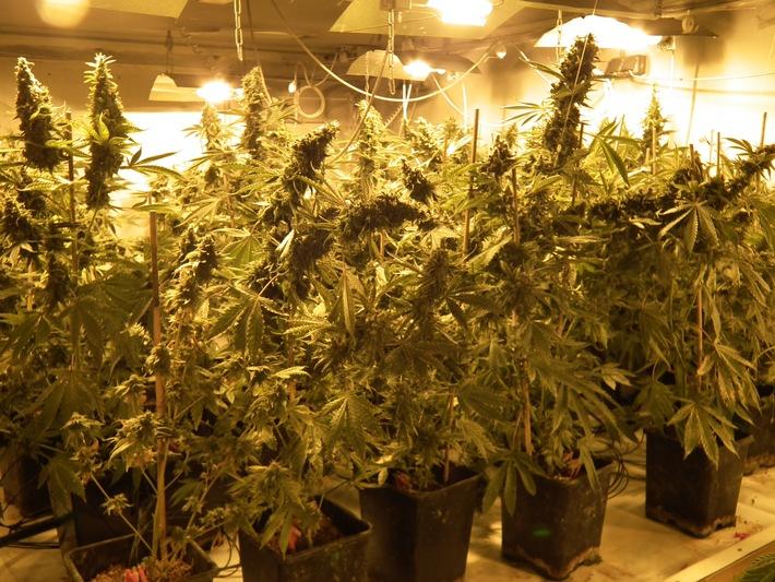 POL-SE: Norderstedt / Sicherstellung einer Cannabisindoorplantage