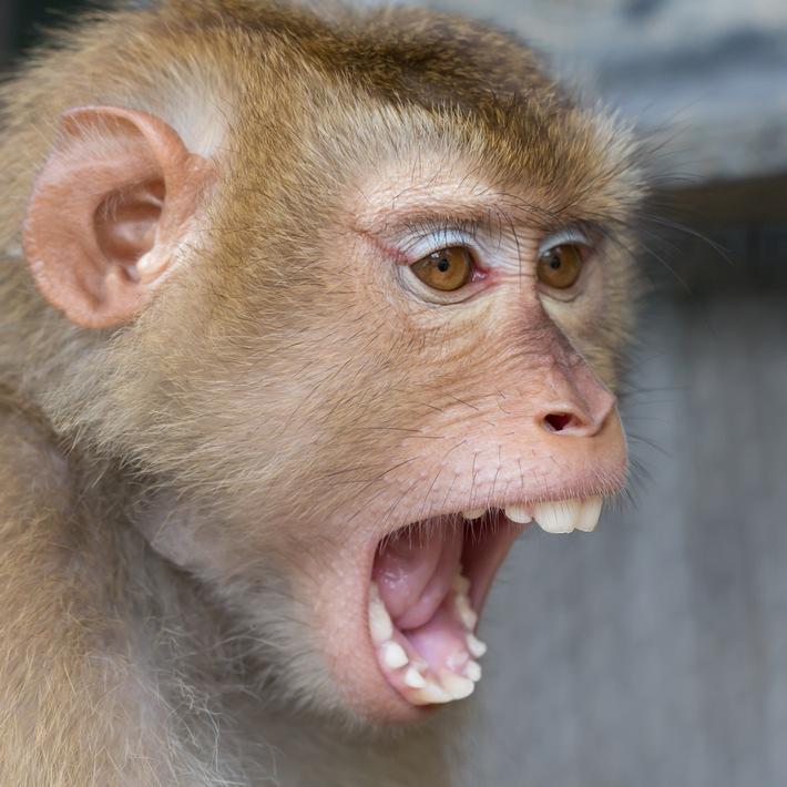 Zürcher Tierschutz kritisiert Fehlurteil zu Primatenversuchen