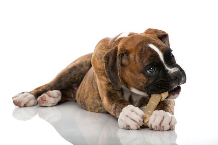 Keine Angst vorm Zahnarzt / Zahnpflege bei Hund und Katze beugt Schmerz und Krankheit vor