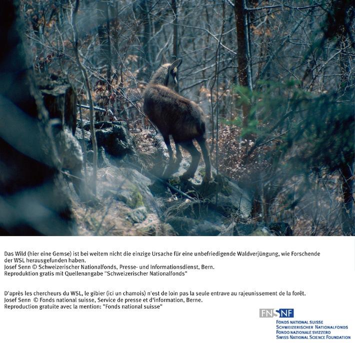SNF: Bild des Monats Juli 2006: Wald und Wild: Eine Neubewertung