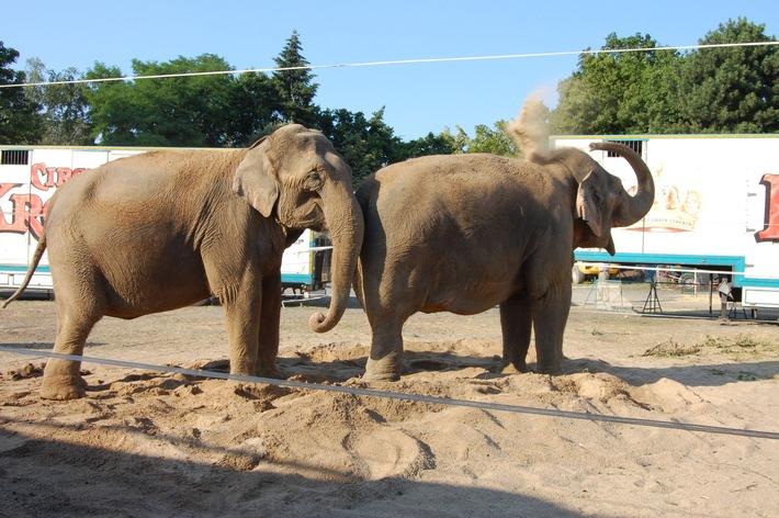 Aktionsbündnis: Bundesratsinitiative liefert keine ausreichende Begründung für Tierverbote im Zirkus