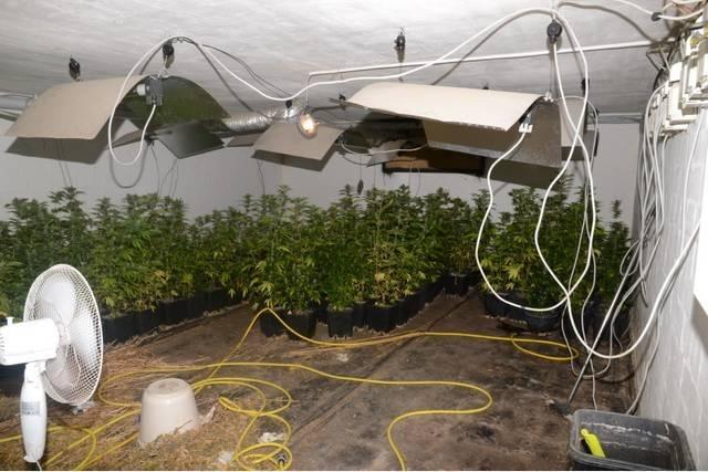 POL-H: Wunstorf: Indoorplantage beschlagnahmt