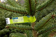 Wenn der Weihnachtsbaum nach Hause kommt / Rund 80 Prozent der Coop-Weihnachtsbäume stammen aus der Schweiz