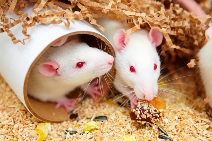 Protection des animaux dans l'industrie pharmaceutique
