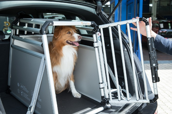 Verkehrssicherheit / Todesfalle Auto - wenn Hunde falsch gesichert sind (BILD)
