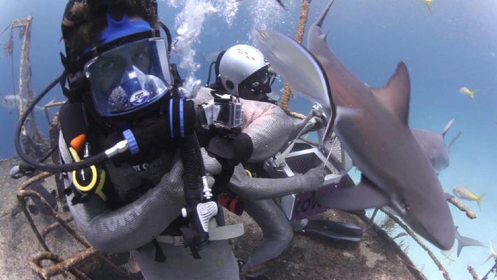 Hai-Attacke auf Klaas Heufer-Umlauf!