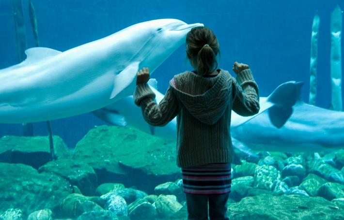 Nachts in der Delphinlagune