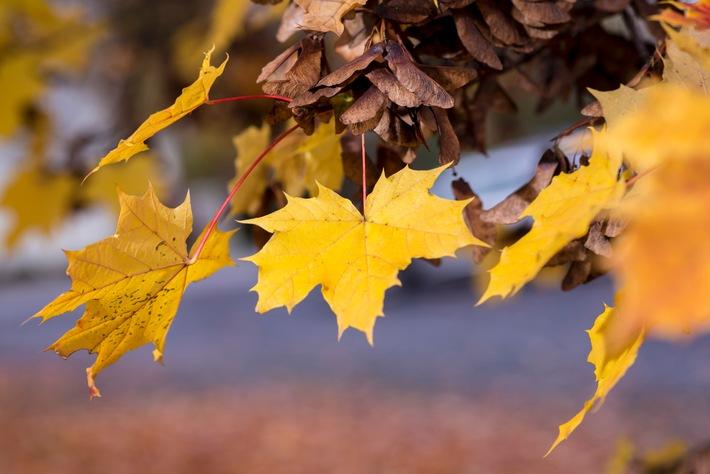 Tipps für den Alltag: Wenn die Blätter fallen / Herbstlaub kann Straßen in rutschige Flächen verwandeln