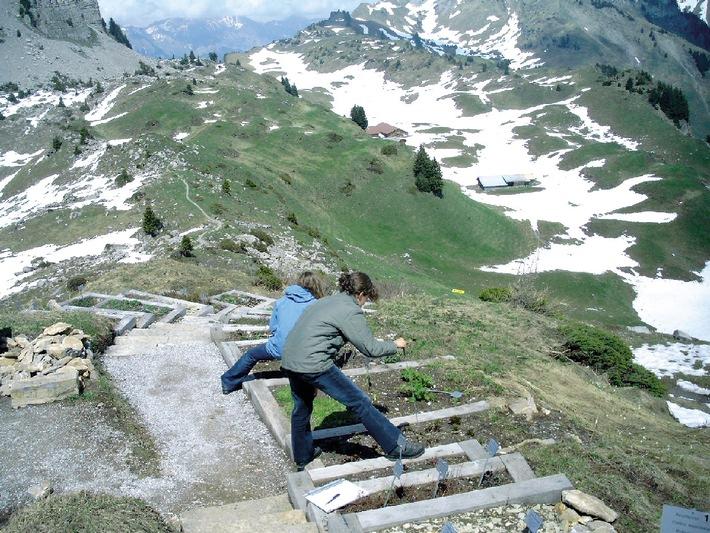 Interlaken/Wilderswil-Schynige Platte: Alpengarten öffnet seine Tore