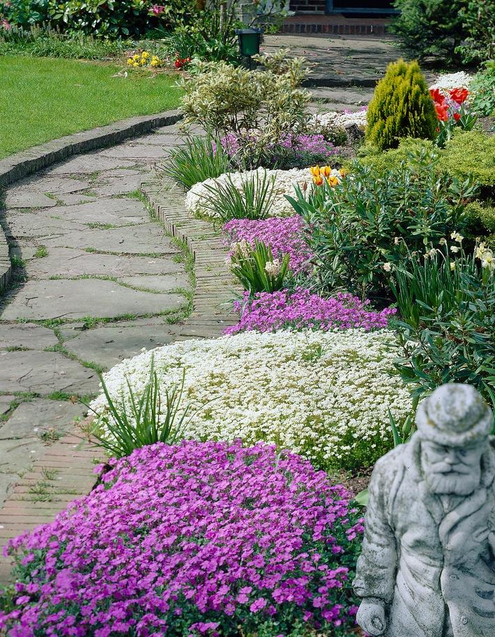 Blaukissen und Steinbrech eröffnen die Gartensaison / Flächendeckende Pracht für Boden und Beet