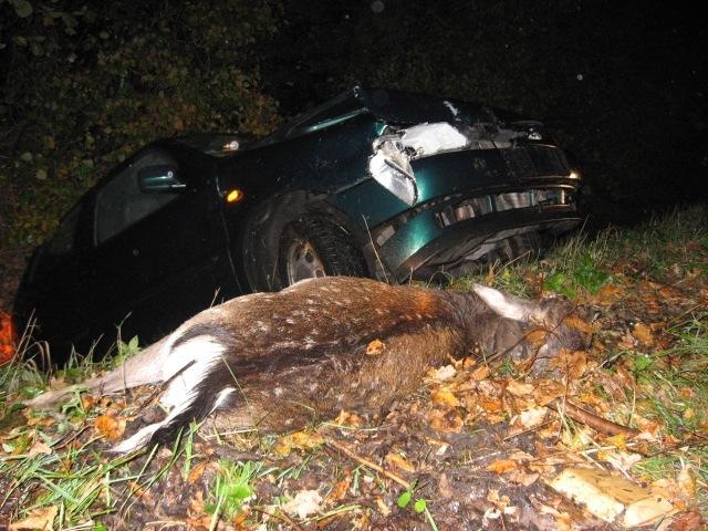 POL-SE: Wensin: Polizei warnt nochmals vor Wildwechsel (Foto)