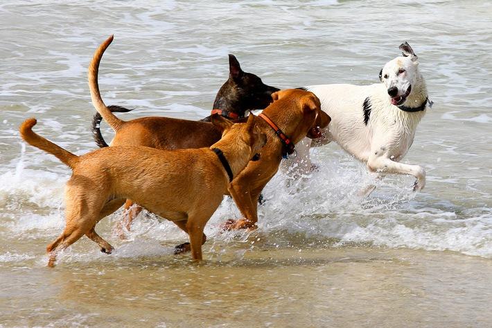Reisen ohne Gefahr / Viele Hundebesitzer nehmen ihre Lieblinge mit in den Urlaub. Im Feriendomizil warten aber nicht nur Sonne und Meer, sondern es lauern auch Gefahren für den Hund