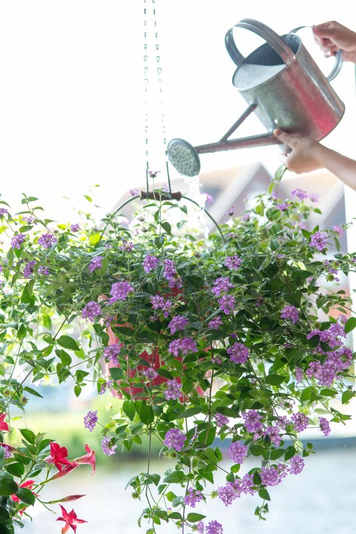 Clevere Bepflanzungen mit farbenfrohen Gartenblühern / Urban Gardening: Grüne Oase für kleine Balkone