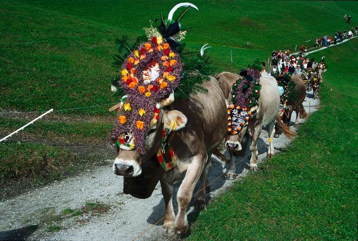 Hintertuxer Oktoberfest: Der schönste Almabtrieb in Tirol
