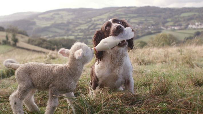 """Der """"Tag des Hundes""""  bei SAT.1 Gold: """"Faszination Hund: Unser Partner mit dem sechsten Sinn"""" am Sonntag, 1. Juni 2014"""