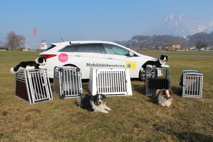 Viaggiare con cani a bordo : in gabbia con sicurezza