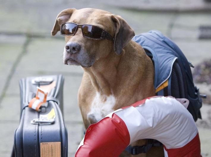 Urlaub mit dem Hund / Damit aus der Reise in den Süden kein Horrortrip wird (mit Bild)