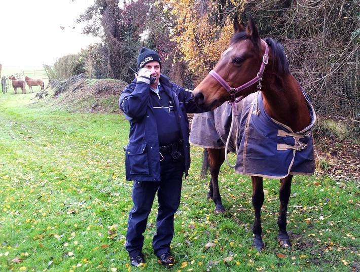 POL-REK: Pferde im Polizeigewahrsam - Frechen