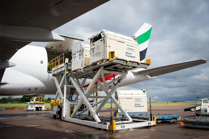 Wie reisen Pferde zu den Olympischen Spielen in Rio? Natürlich mit dem Flugzeug!