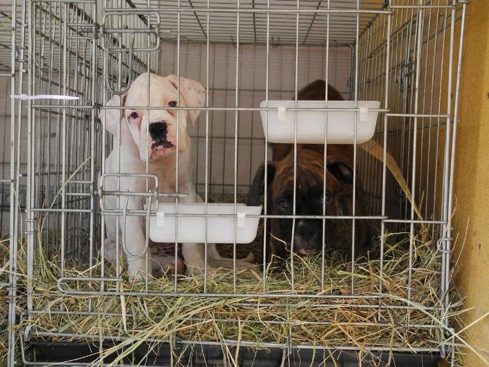 Welpenmafia: VIER PFOTEN warnt vor illegalem Hundehandel!