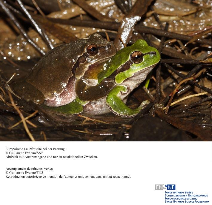 SNF: Bild des Monats Oktober 2008: Sexuelle Differenzierung