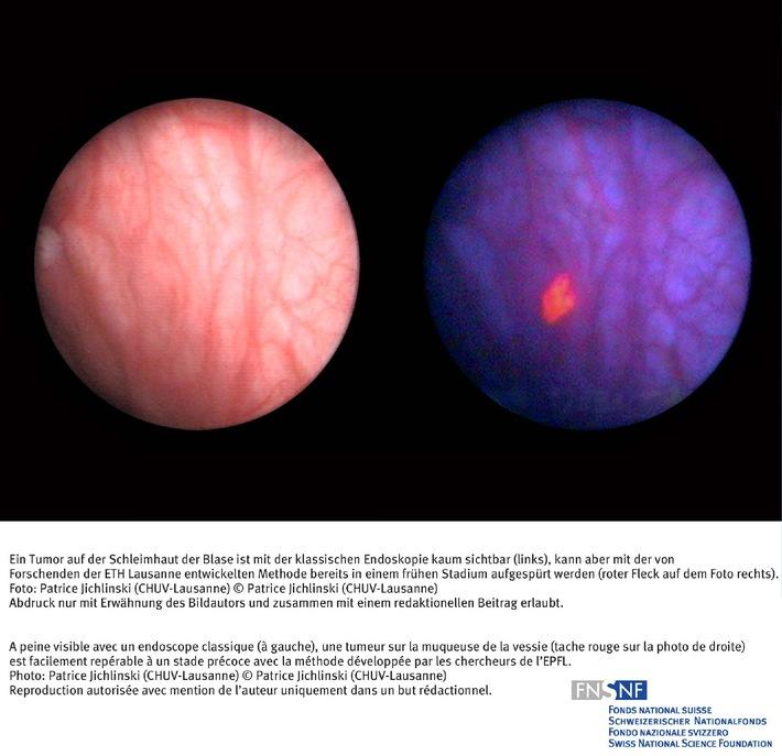 SNF: Bild des Monats August 2006: Schöner Erfolg der  Grundlagenforschung