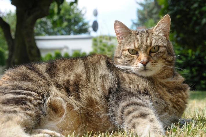 Übergewicht - eine Zivilisationskrankheit bei Hund und Katze (mit Bild)