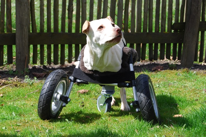Rollstuhl aus dem 3D-Drucker für Hündin Luisa / Multec entwickelt einen Rollstuhl aus dem 3D-Drucker für Hündin ohne Vorderbeine