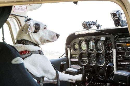 "Sky lässt Hunde fliegen: Factual-Entertainment-Format ""Dogs might fly"" exklusiv auf Sky 1"
