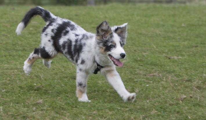 Impfung - Erfolgreicher Start in ein unbeschwertes Hundeleben (mit Bild) / Impfungen im Welpenalter sind der beste Schutz vor schweren Infektionen