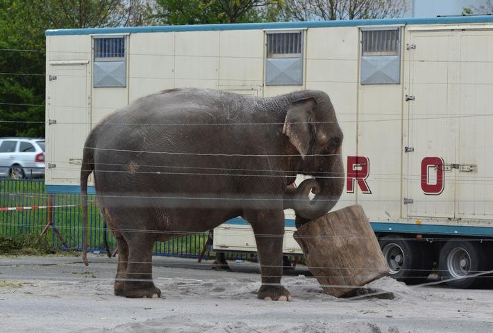 Zirkus in Tuttlingen: Das von OB Beck angestrebte Wildtierverbot passt nicht in eine aufgeklärte Gesellschaft