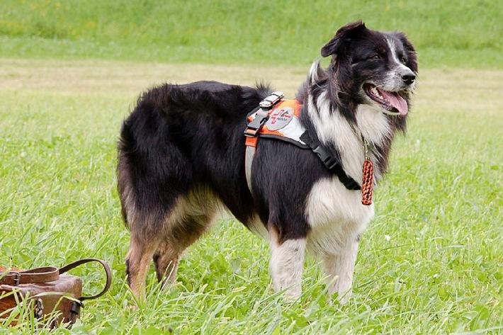 27. April 2014: Internationaler Tag des Rettungshundes (BILD)