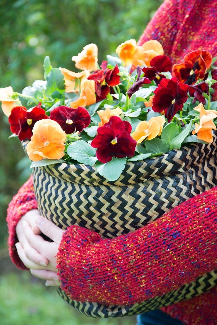 Robuste Gartenblüher setzen im Herbst Lichtpunkte auf Balkon & Terrasse / Herbstlicher Außenbereich mit dem facettenreichen Veilchen