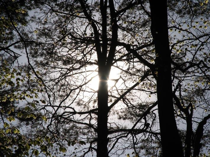 Holzenergie gewinnt dank der CO2-Abgabe