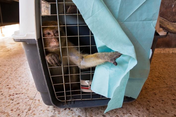"""Der """"schlimmste Zoo der Welt"""" ist geschlossen / VIER PFOTEN bringt Tiere sicher über die Grenze"""