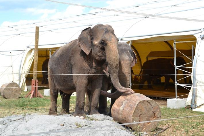 Tierverbot im Zirkus: Antrag des Landes Hessen ohne wissenschaftliche Substanz