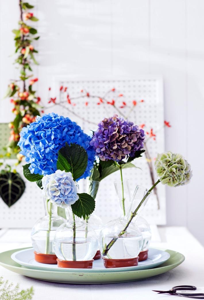 Kugelrunder Blütenspaß: kein Sommer ohne Hortensien / Harmonische Interieur-Gestaltung mit der Hortensie
