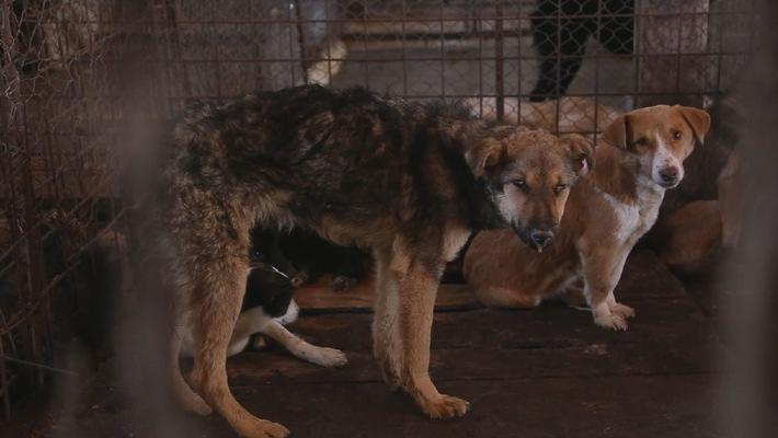Offizielles Dokument zeigt: Rumänisches Kind wurde nicht von Streunern getötet / VIER PFOTEN fordert von Ministerpräsident Ponta Abschaffung des Streunerhunde-Tötungsgesetzes