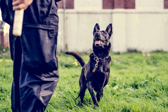 Neuer Diensthund 3