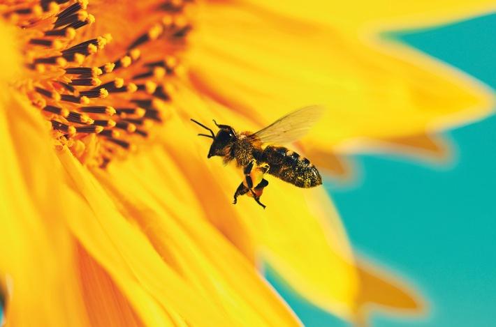 "Finale im ""Kaffee oder Tee-Bienenparadies"""