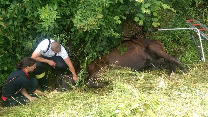 FW-OE: Pferdekutsche verunglückt - erfolgreiche Rettung eines Pferdes in Elspe