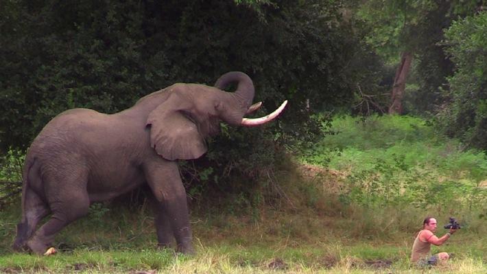Wenn er jetzt angreift, ist es vorbei! Abenteurer Richard Gress entgeht nur knapp einer Elefanten-Attacke / Die Wildnis und ich - Die Abenteuer des Richard Gress, am 13. Januar 2015 bei kabel eins