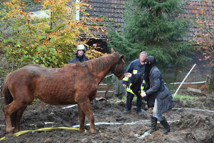 FW-E: Erfolgreiche Tierrettung in Essen-Byfang, Holsteiner Pferd war in Graben gerutscht