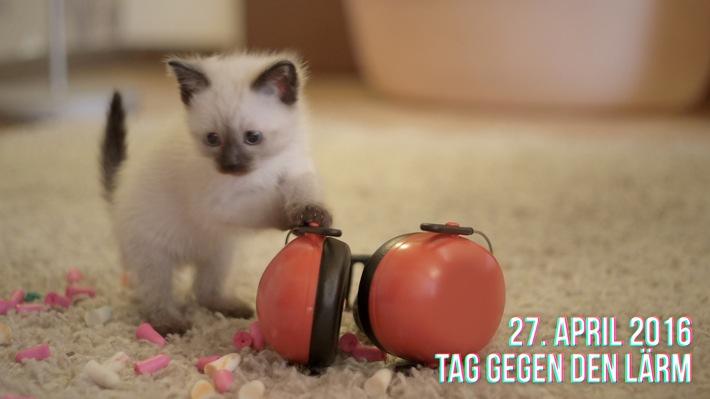 Katzenvideo wirbt für Lärmschutz / Tag gegen Lärm am 27. April 2016