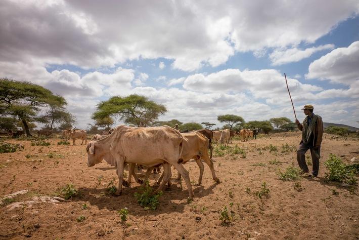 Caritas Suisse assure des secours d'urgence en Éthiopie, au Kenya, au Congo et au Somaliland / La famine s'aggrave en Afrique de l'Est